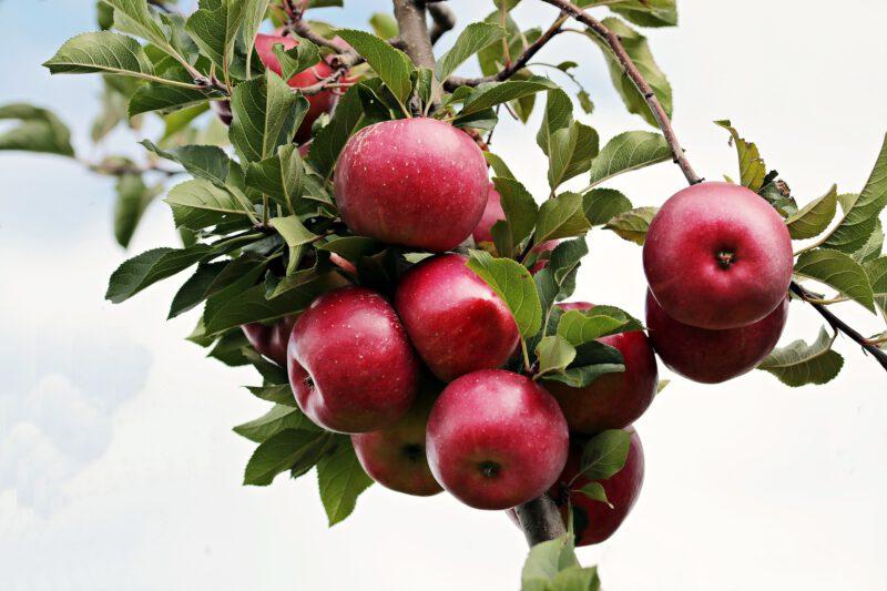 Cenne właściwości octu jabłkowego